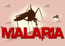 malaria_pic